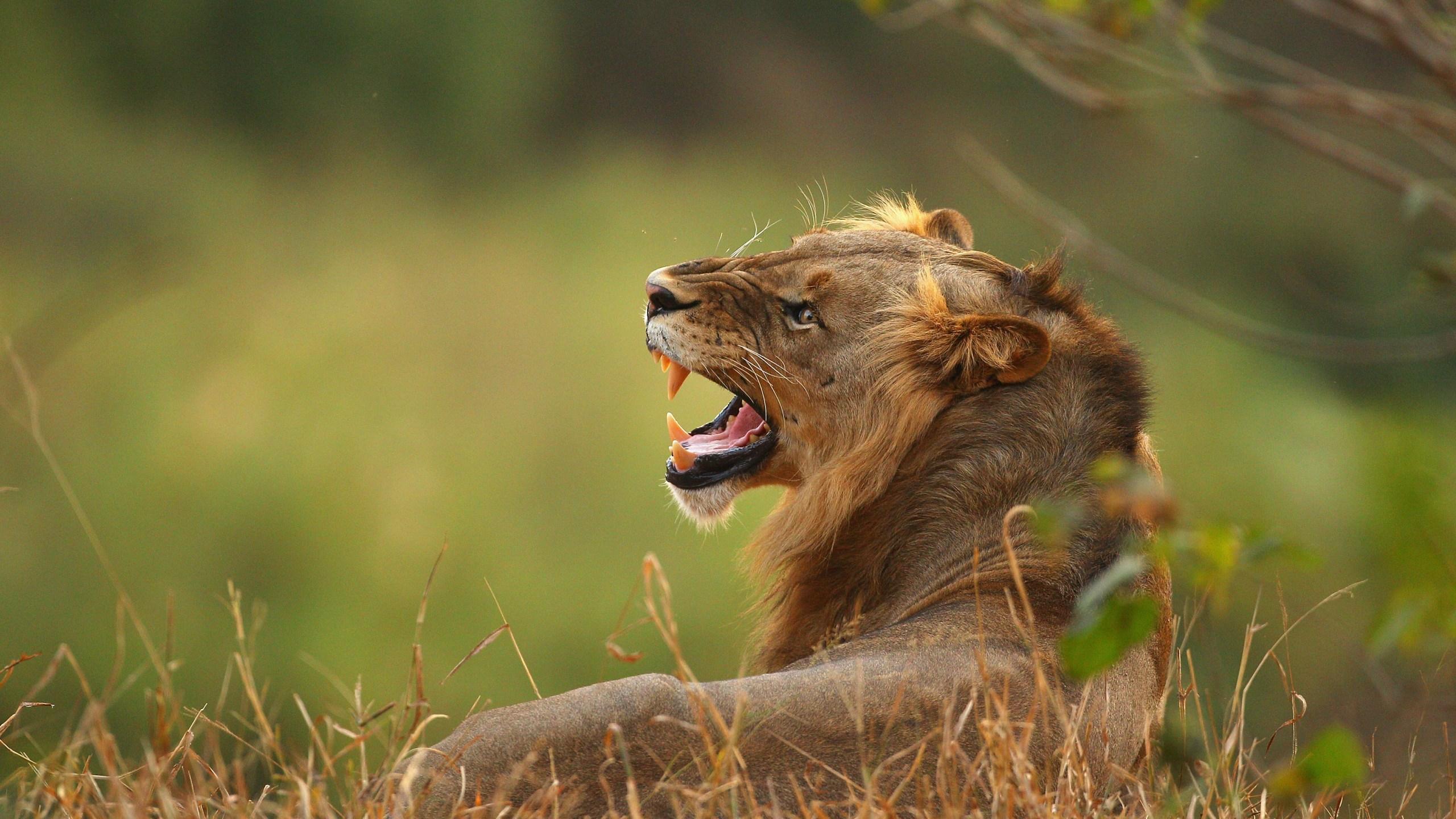 An African Safari_634801