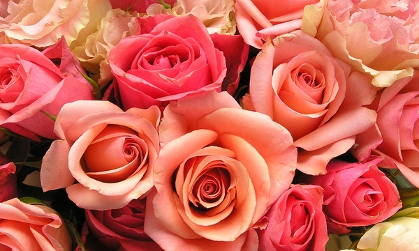 roses-flowers-valentines-day_1517879321399_340223_ver1-0_33247436_ver1-0_640_360_630139