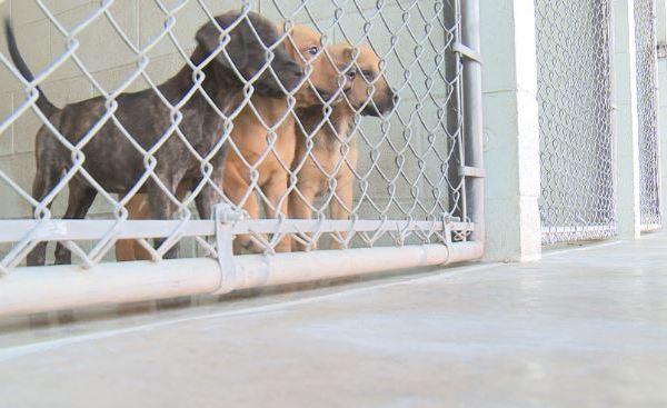 San Marcos Regional Animal Shelter_517196