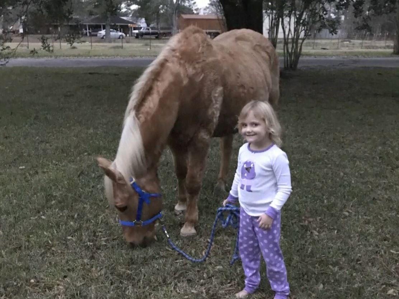 sunshine horse killed_641103