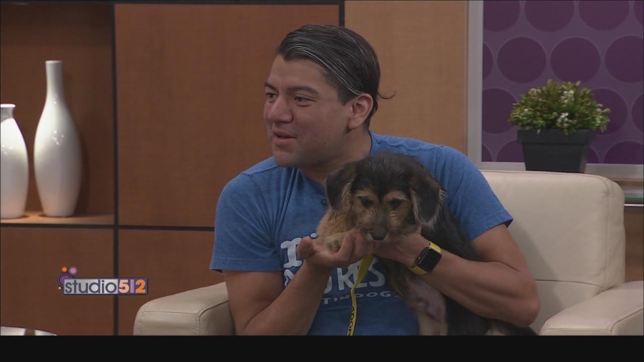 Austin_Dog_Rescue_0_20180329215146