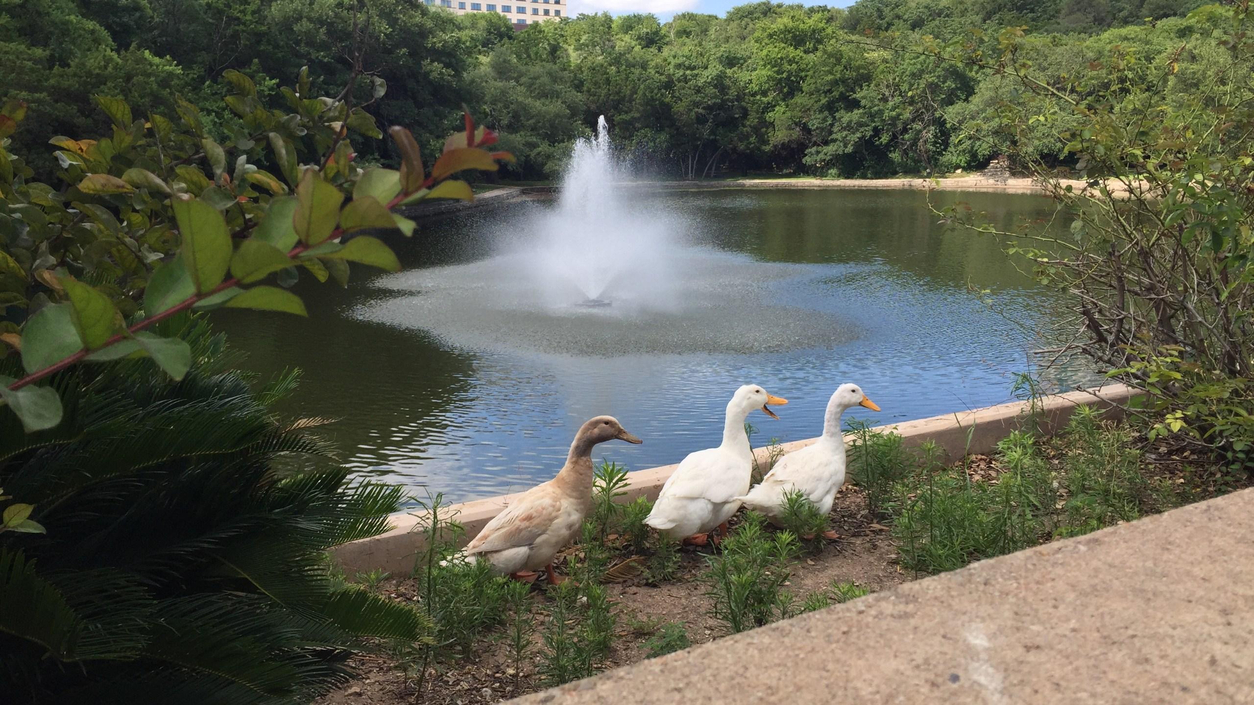 Arboretum duck pond (KXAN photo_Chris Nelson)_488076