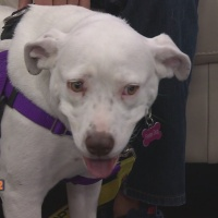 Austin_Dog_Rescue_0_20180426211430