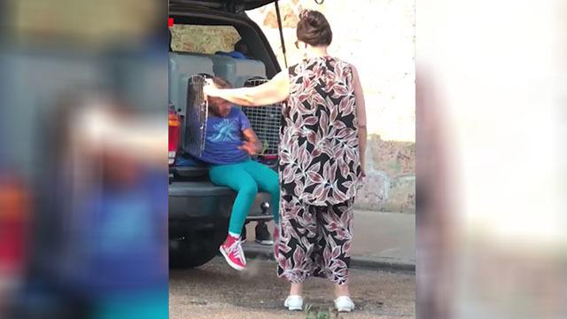 Memphis children dog kennel_1528681074290.jpg_45085579_ver1.0_640_360_1528731851683.jpg.jpg