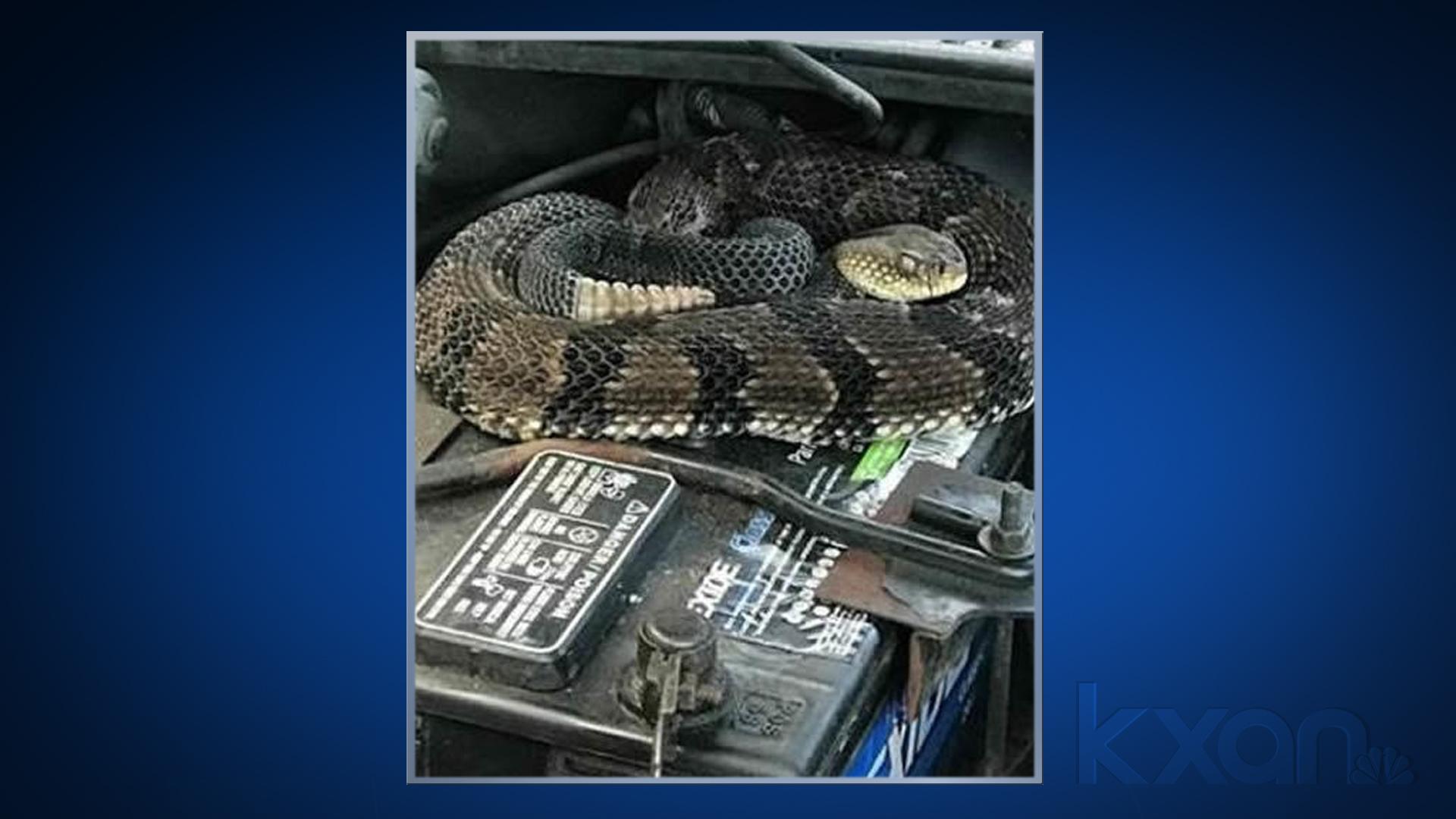 rattlesnake engine_1529599364599.jpg.jpg