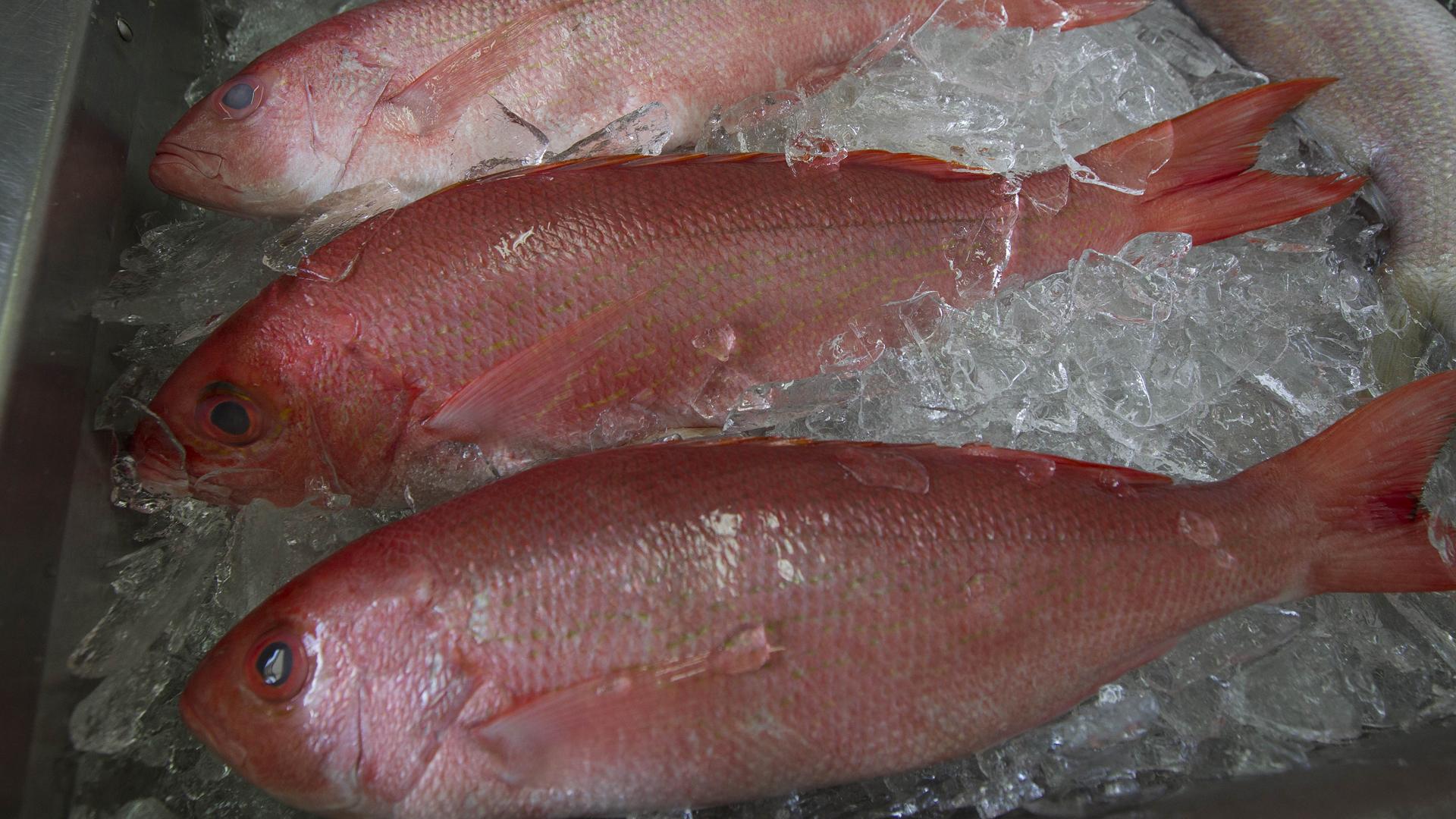Selling Alabama Seafood_1532115640688-727168854