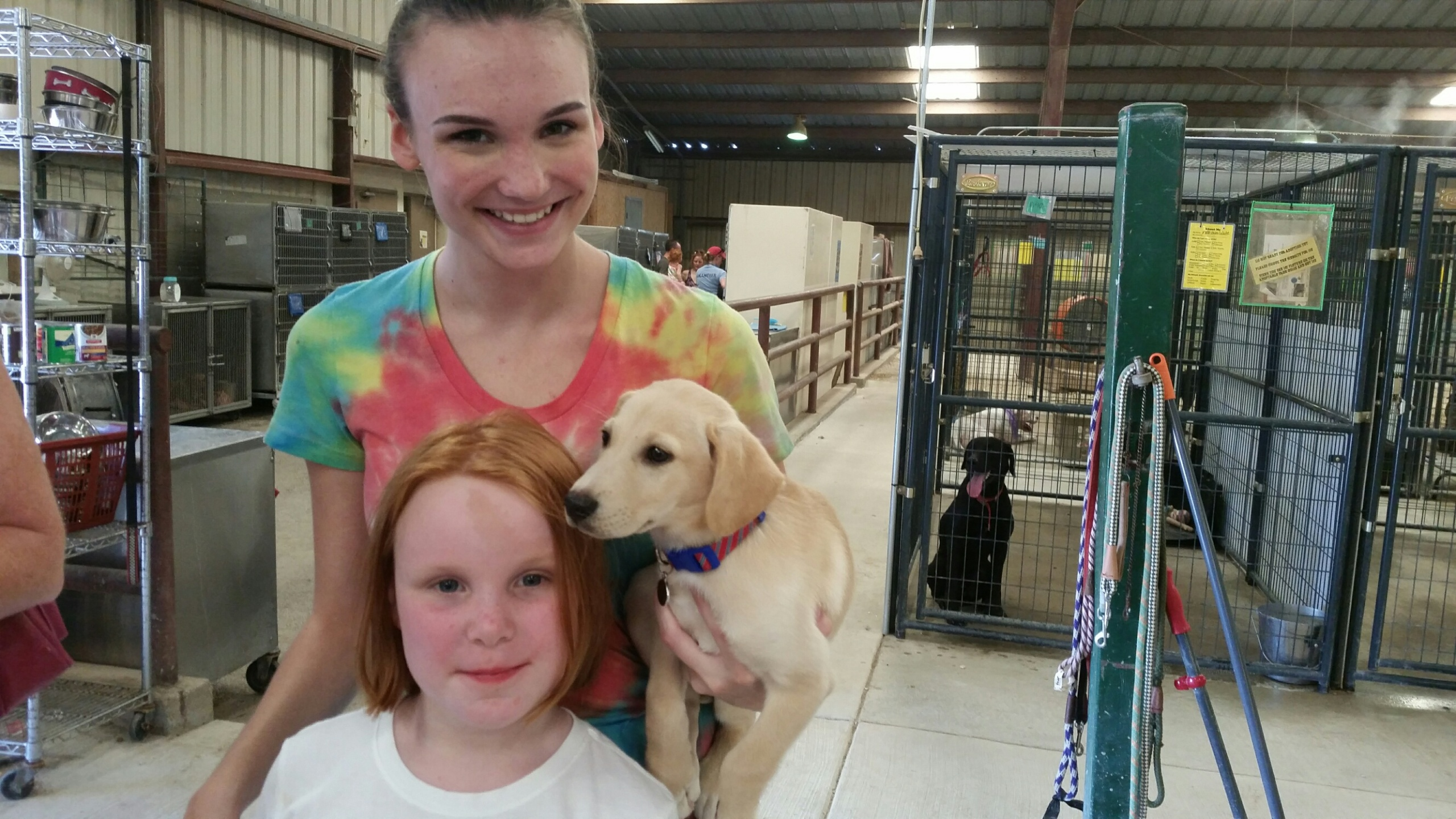 Clear the Shelters - dog adoption - Williamson County Regional Animal Shelter