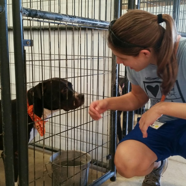 Clear the Shelters - Williamson County Regional Animal Shelter