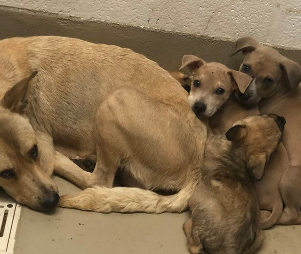 dog and puppies up for adoption at austin animal center