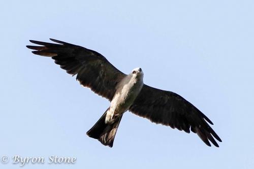 September Bird Forecast High Flyers