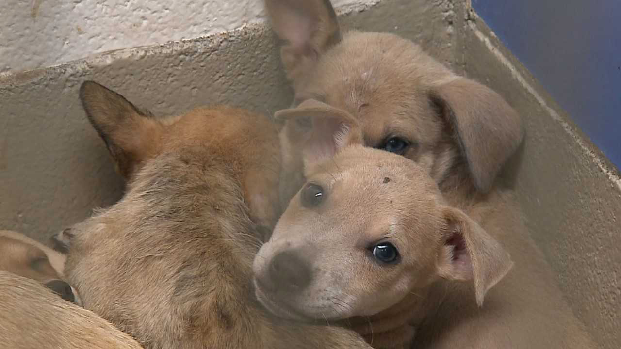 Dogs up for adoption at Austin Animal Center