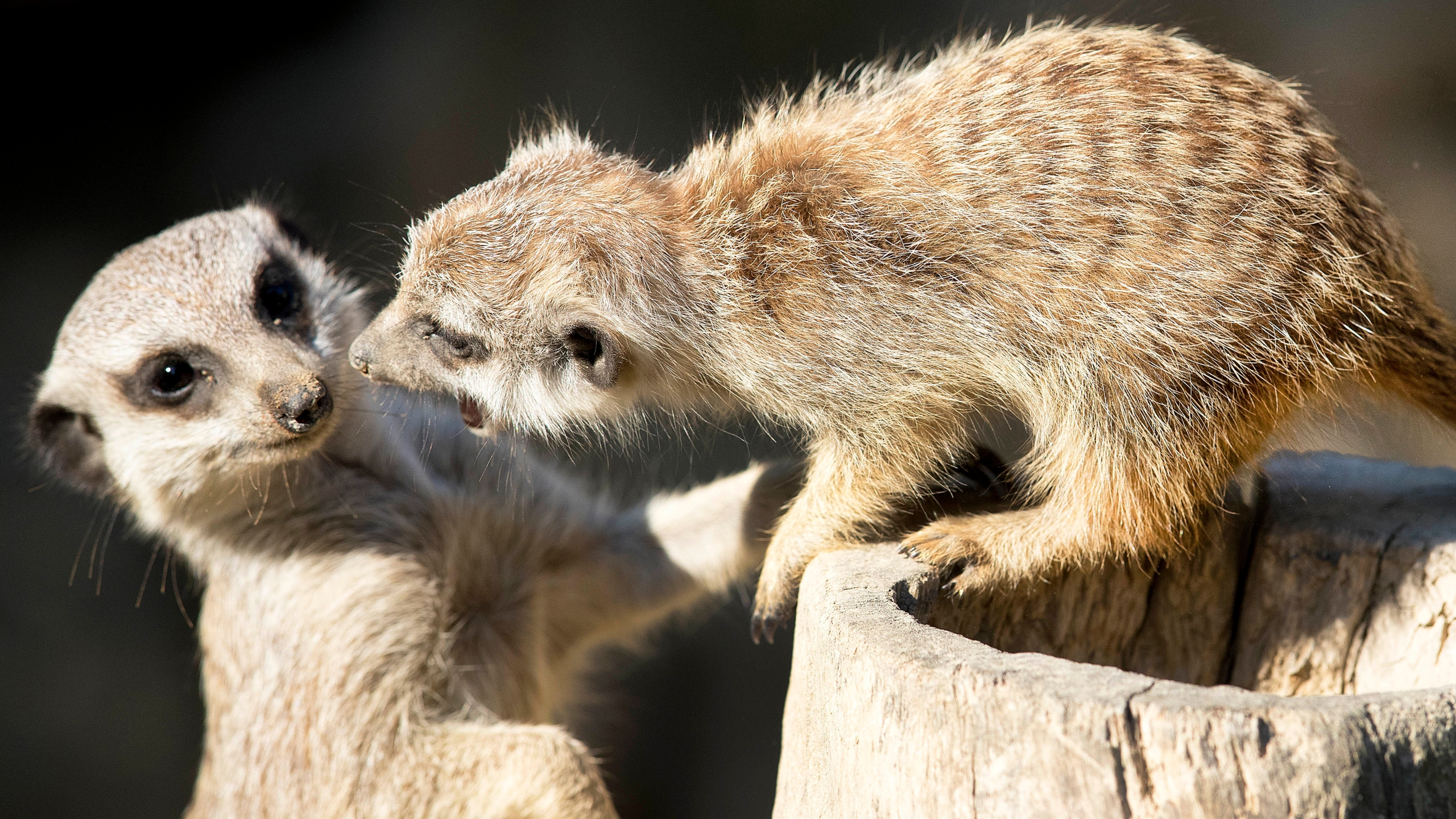 Germany Zoo_1549547018726