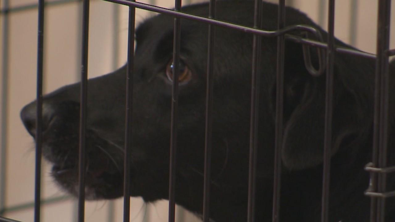 Austin animal shelter overcrowding