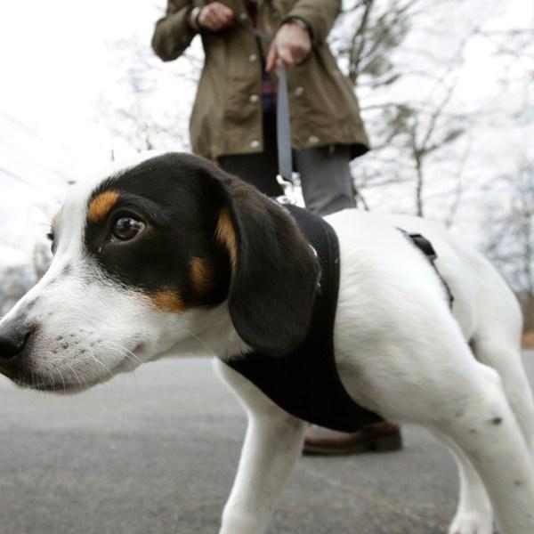 Risky Dog Walking_1559490266591