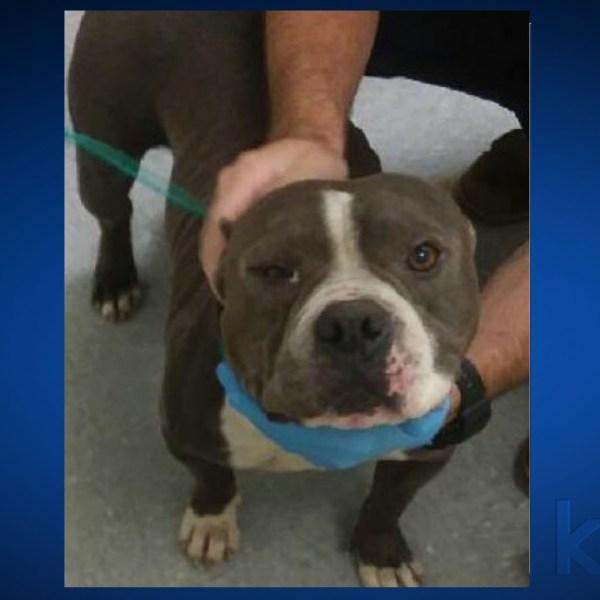 bastrop county animal shelter stolen dog 62419