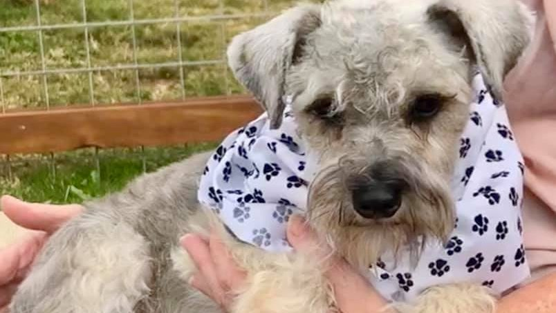 Hypoallergenic Dogs Up For Adoption At