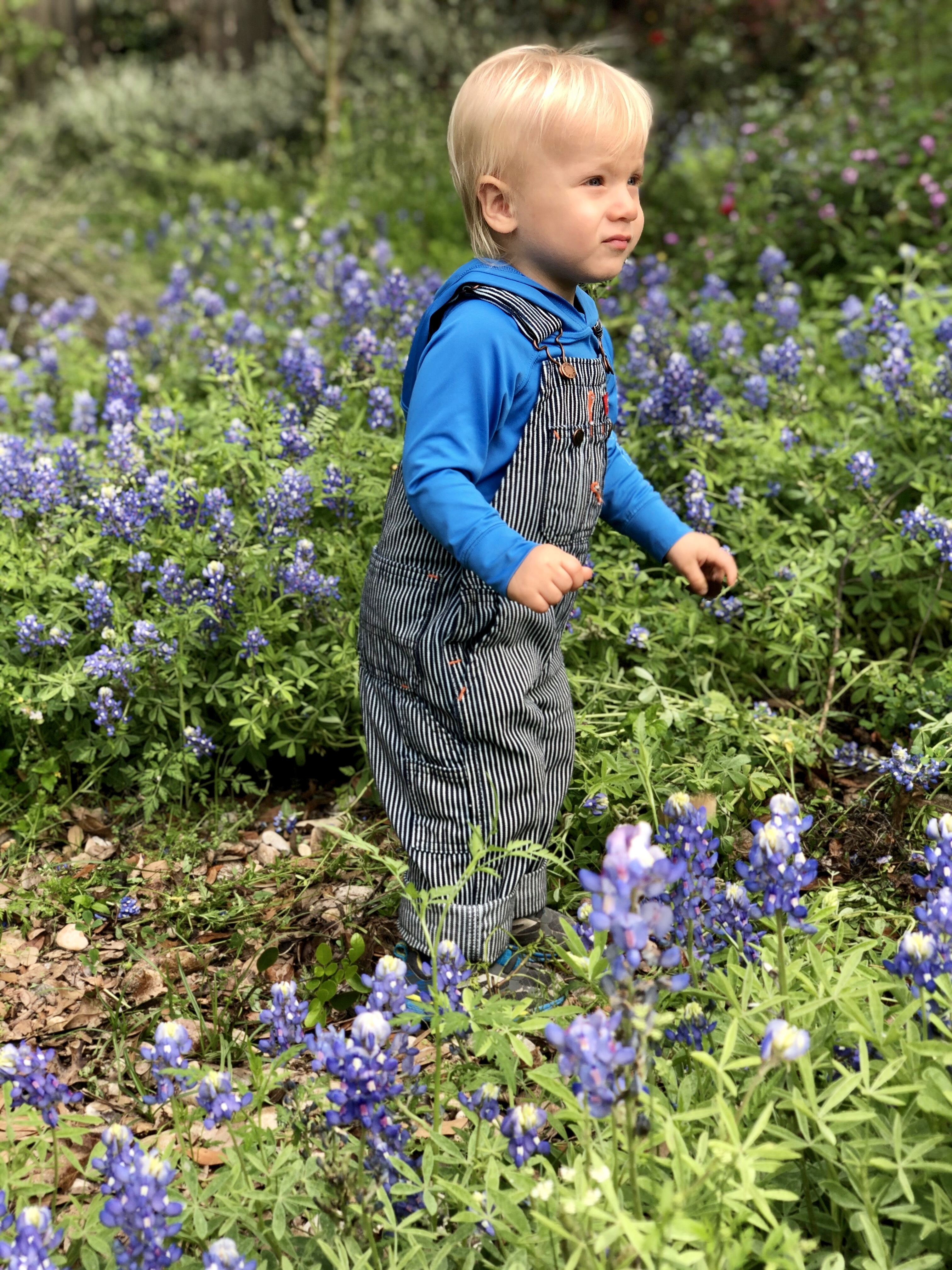 Bluebonnet photo of my son Jack Henry Rodman, age 20 months. Taken in our neighbor's front yard this morning. (Courtesy Amy Rodman)