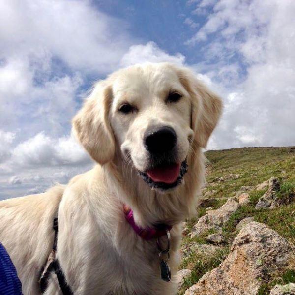 Harper, dog killed by blue-green algae