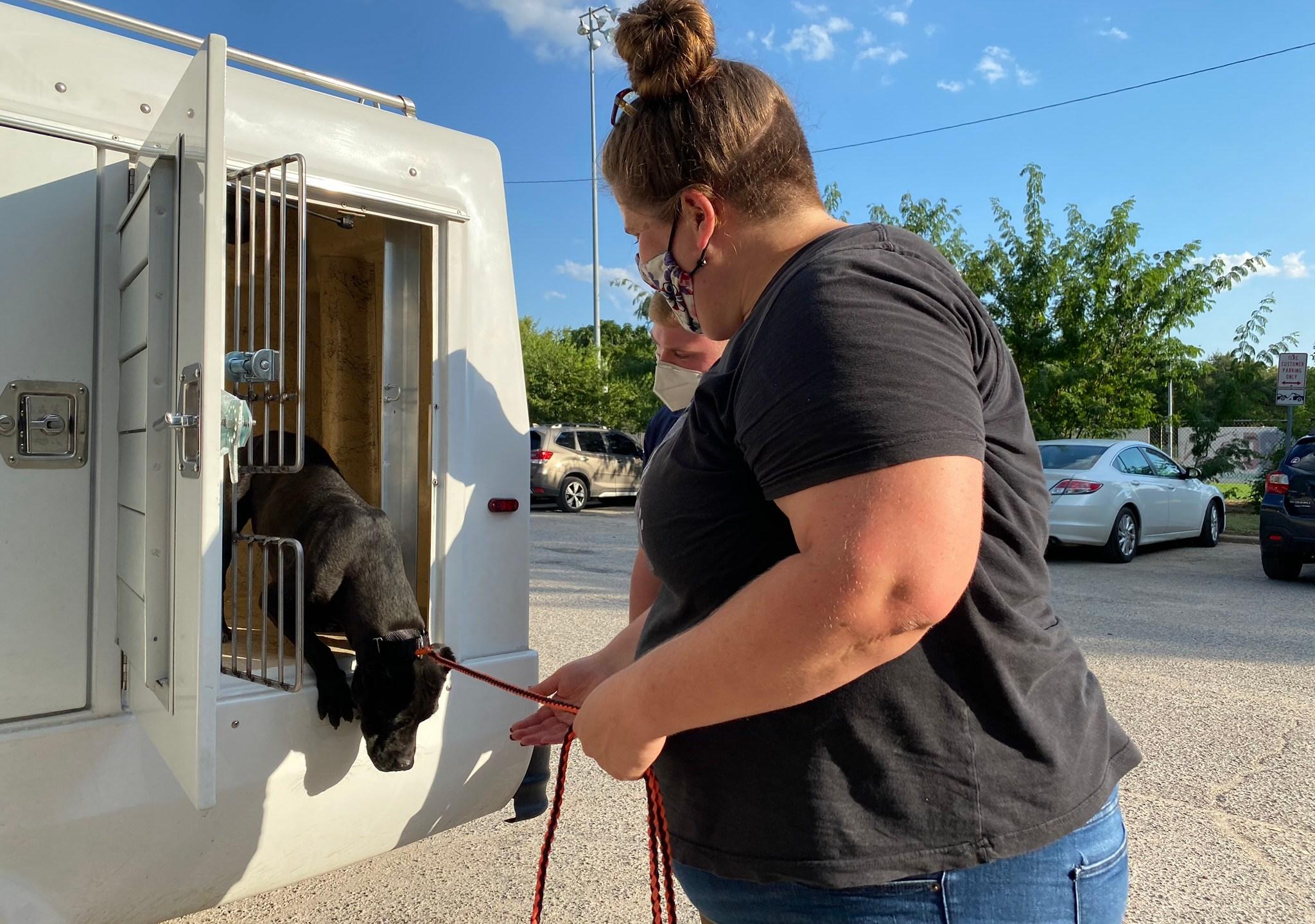 austin pets alive hurricane help