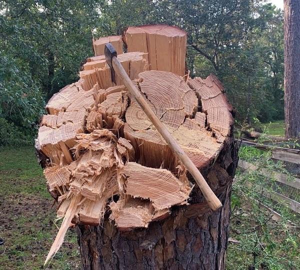 tree austin fire hurricane laura