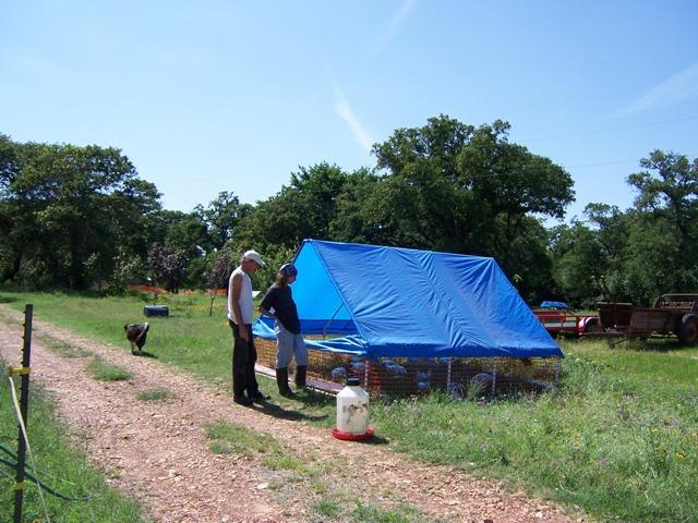 Checking tents at animal farm
