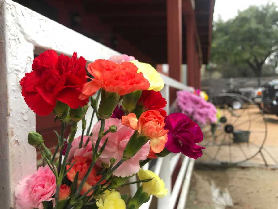 Flowers outside of Austin's Broken Spoke