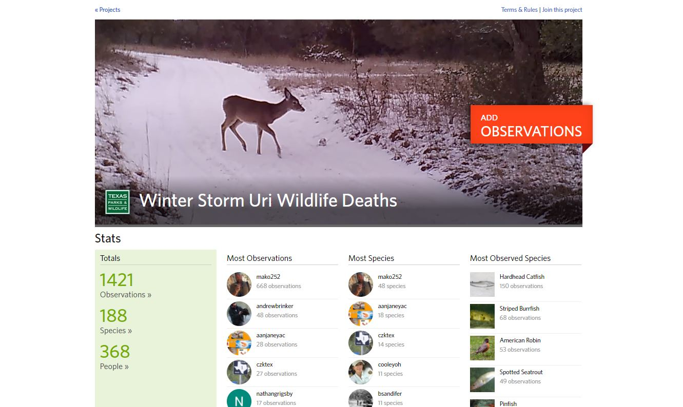 Report your observations through this form on the iNaturalist website.