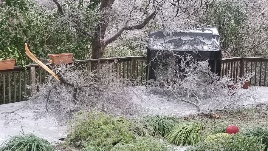 Icy broken tree limbs in Cedar Park/Leander Feb. 11, 2021 (Courtesy Mitch Cooper)
