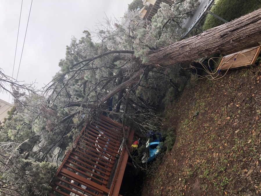 Falling trees in the Oak Ridge subdivision in Leander Feb. 11, 2021 (Courtesy Brooke Fowler)