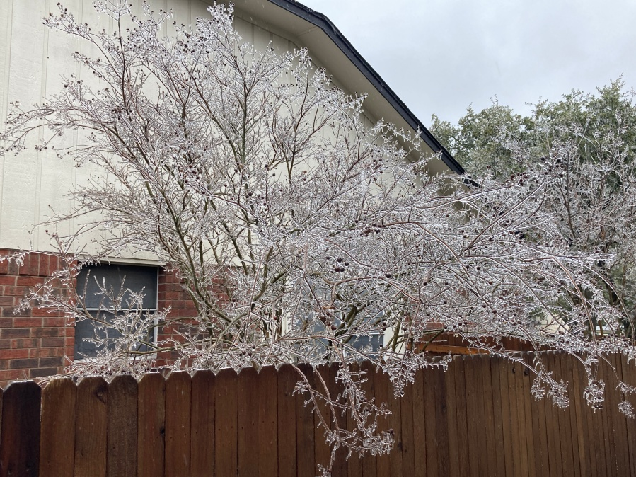 Ice covering everything in Cedar Park Feb. 11, 2021 (Courtesy Karalyn Capone)