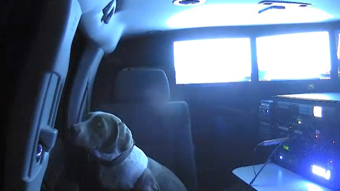 Dog in Weather Unit