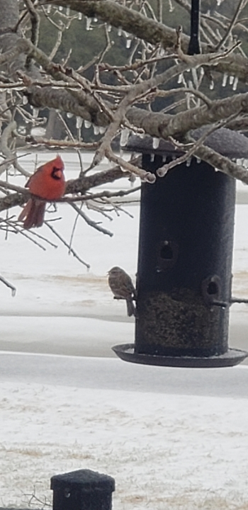 Birds in the wintry Burnet weather (Courtesy Grant Hoffmeister)