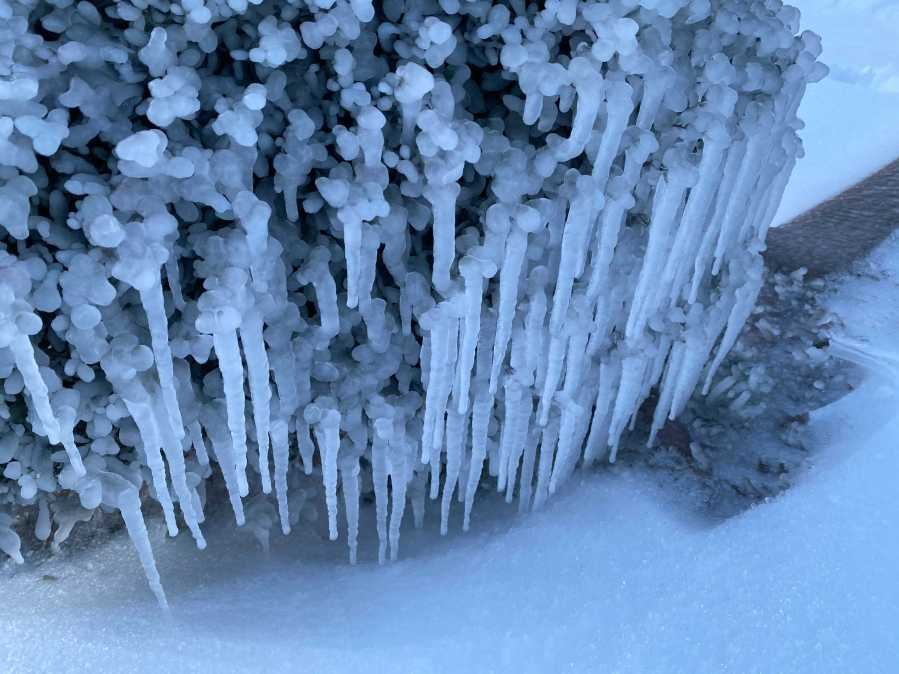 Ice and snow hang from a bush in south Austin KXAN Photo Todd Bailey