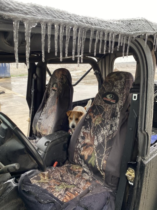 A pup in Georgetown shows off the ice in the car Feb. 11, 2021 (Courtesy Courtney Wolfe)