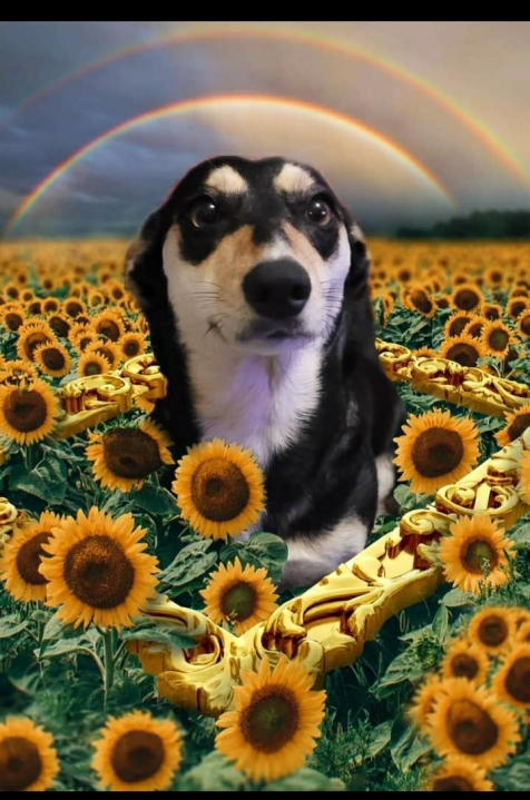 Squeaky - Lockhart dog