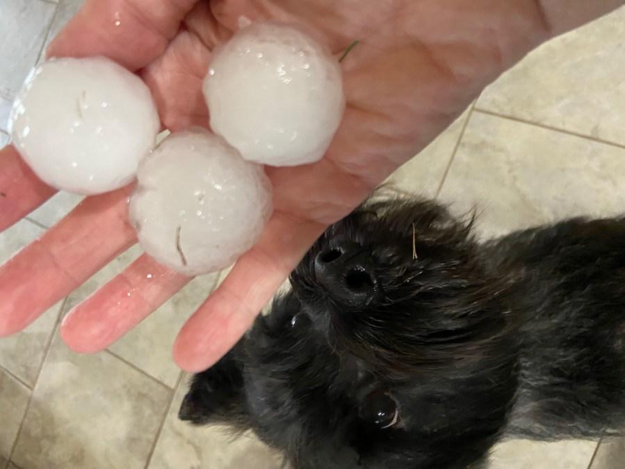 Hail in Leander April 15, 2021 (Courtesy Robin Askelson)