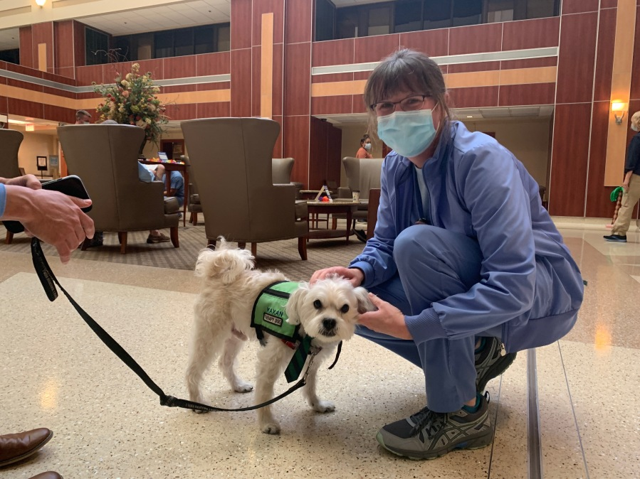 Kaxan and other therapy dogs from Divine Canines visited the staff Thursday at St. David's South Medical Center in Austin. (St. David's photo)