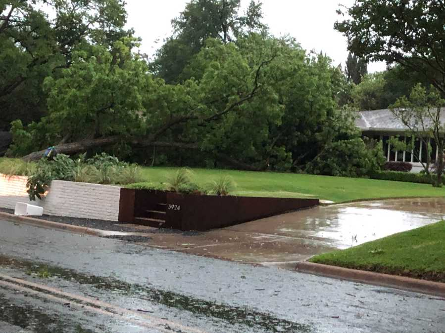 Tree down in the 3900 block of Balcones Drive (KXAN/Phill Robb)