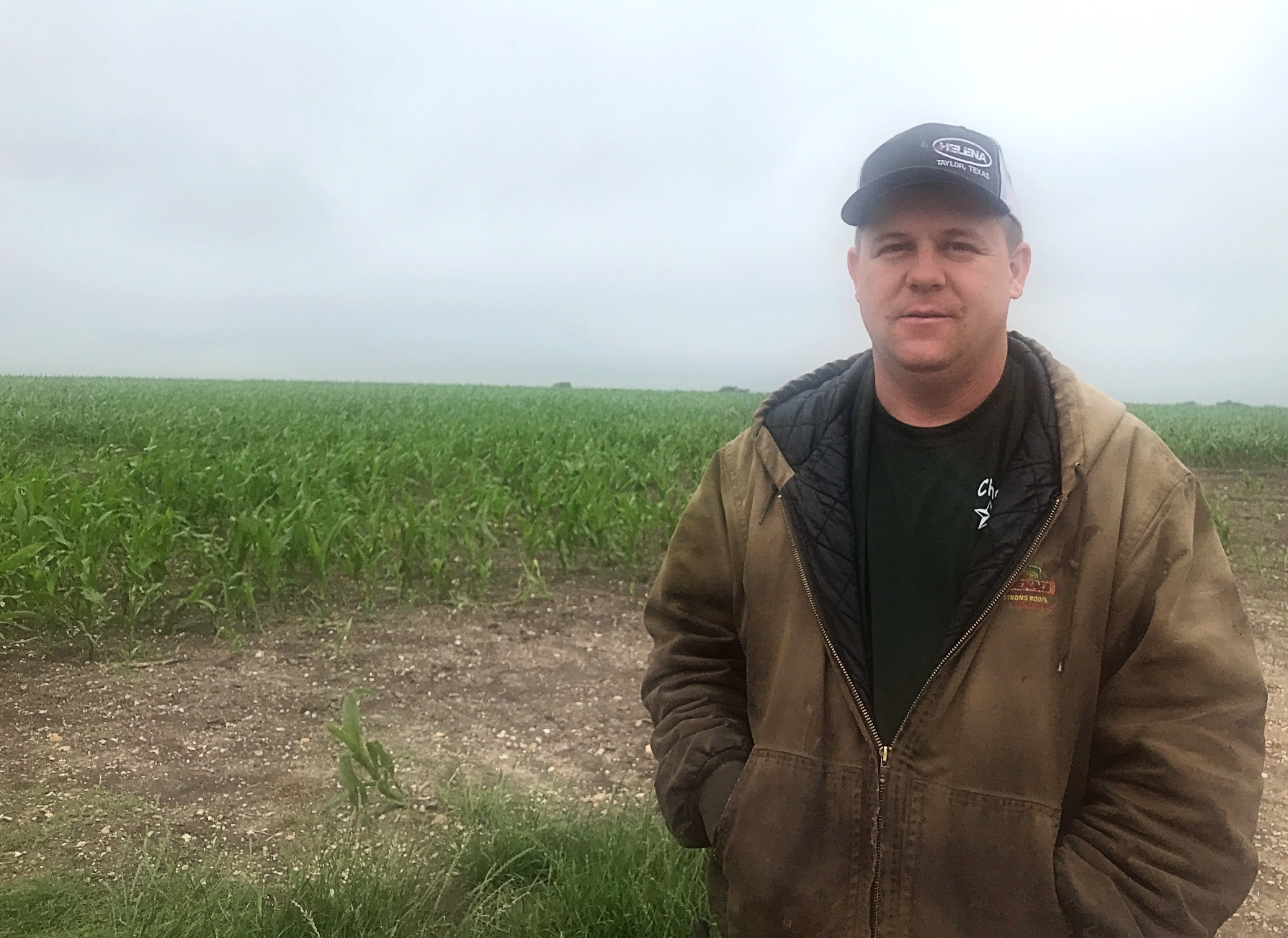 Mark Prinz stands in front of his corn crops at Prinz Farms in Coupland, TX a day after replanting them from a hailstorm. (KXAN Photo/Faith Castle)