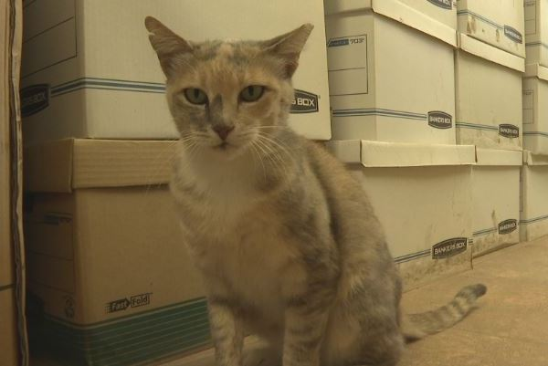 Trash cat named Rose is raising money for nearby animal shelter