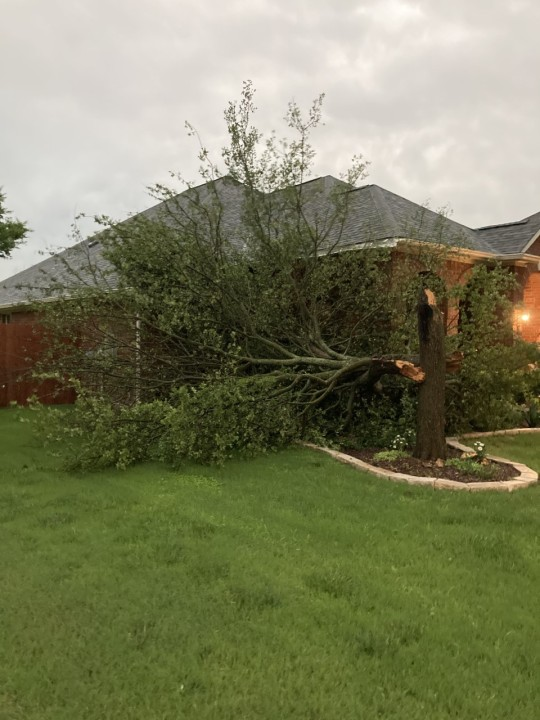 Tree broken off at the Mayfield Ranch subdivision in the Round Rock area (Courtesy Pam DenOtter)