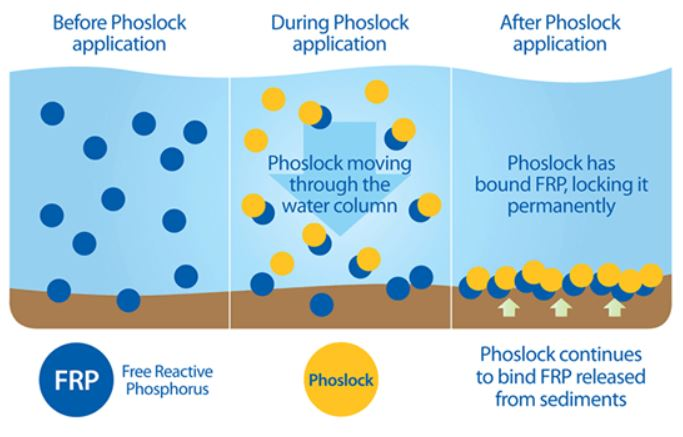 How Phoslock works to treat waterways for toxic algae (Watershed Protection Department Photo)