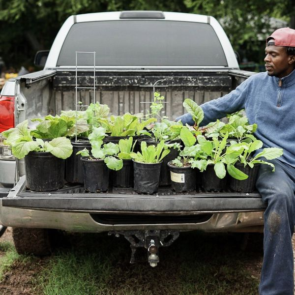 Black Lives Veggies is a nonprofit organization designed to educate Austin residents on gardening and food sustainability, as well as to provide educational resources