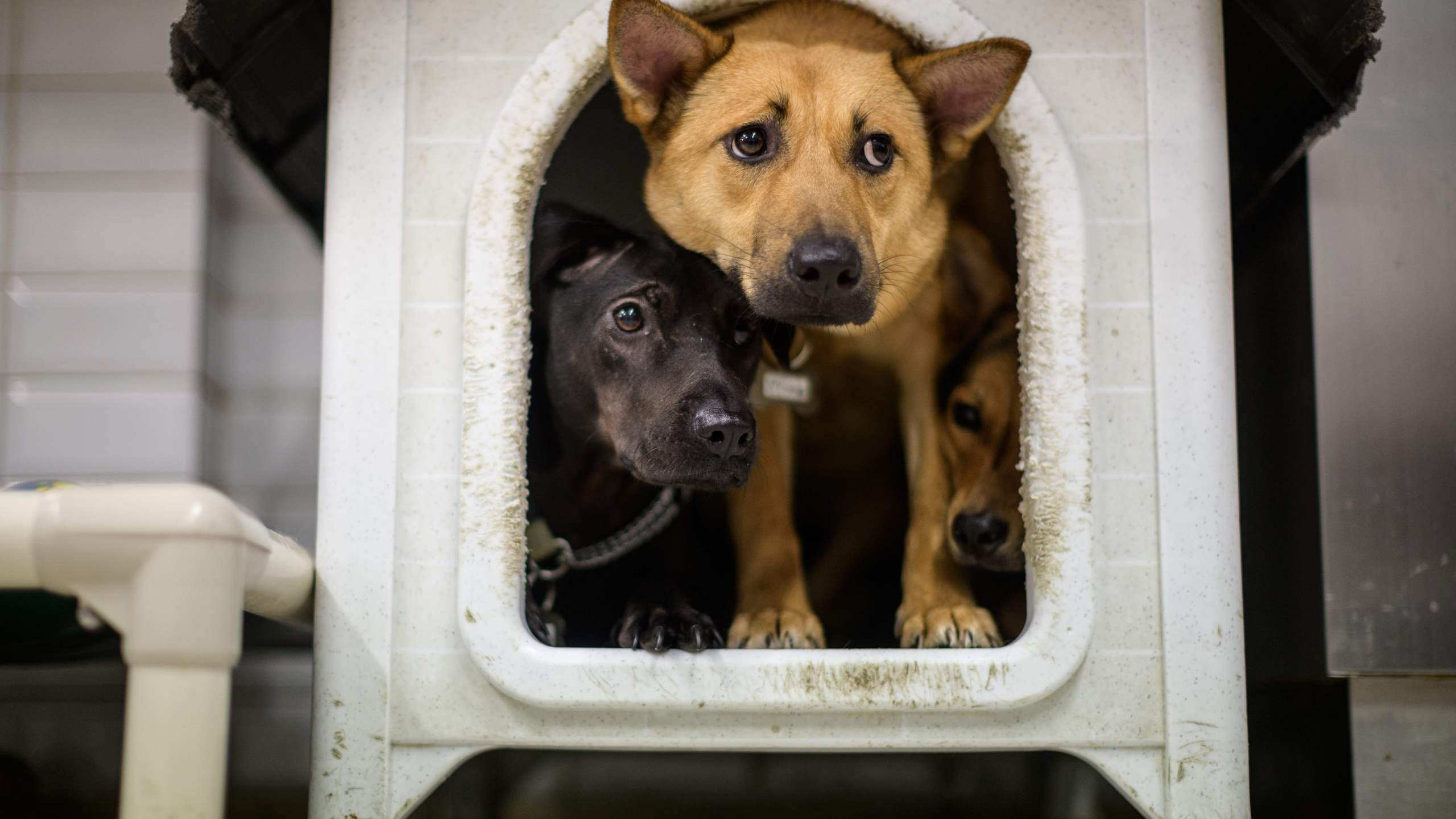 Dogs in a dog house (Photo by ANTHONY WALLACE/AFP via Getty Images)