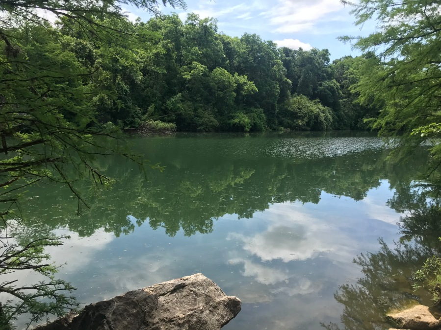 The city of Austin will monitor six sites at Lake Austin and Lady Bird Lake for blue-green algae presence this summer, including at Red Bud Isle.