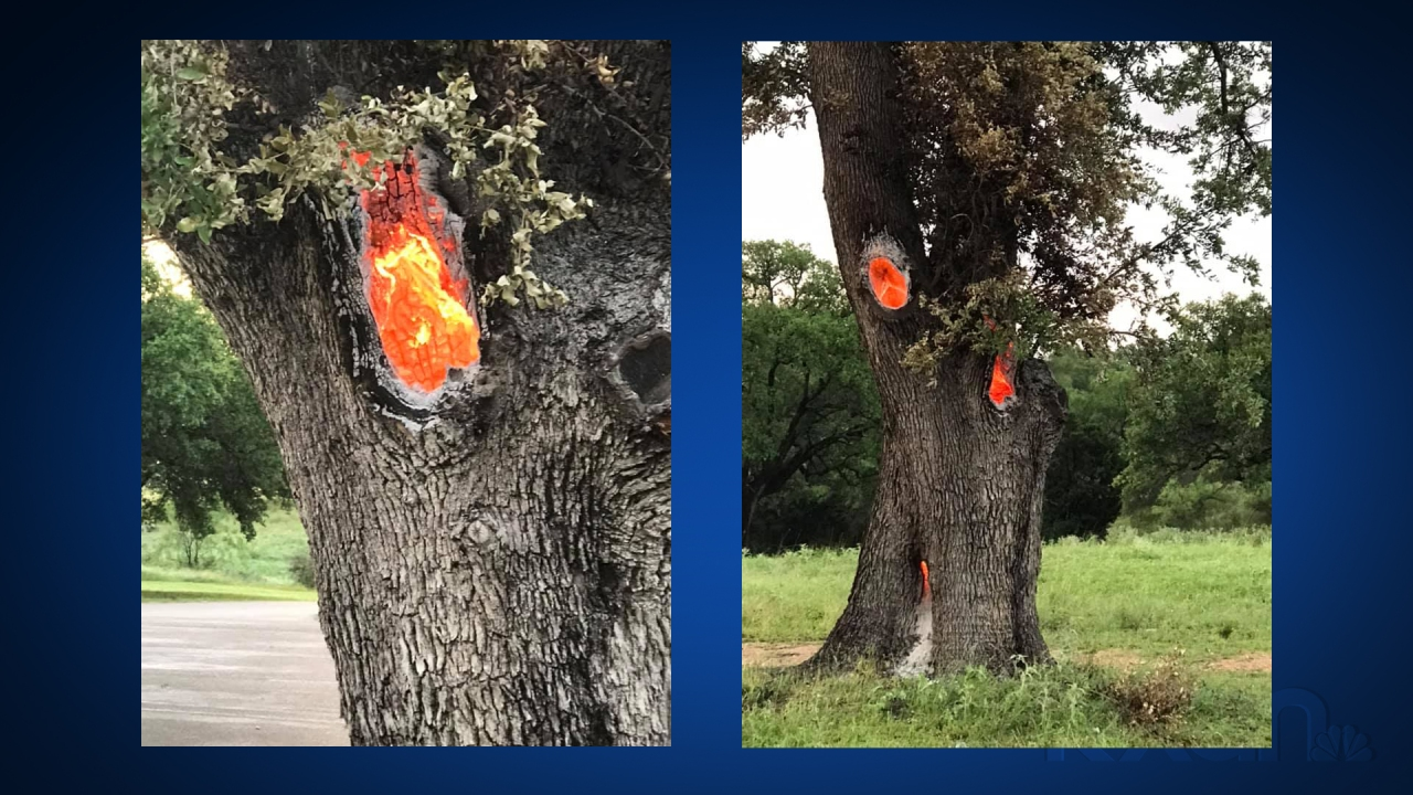 VIEWER PHOTOS: Tree hit by lightning Wednesday still glowing with heat the day after