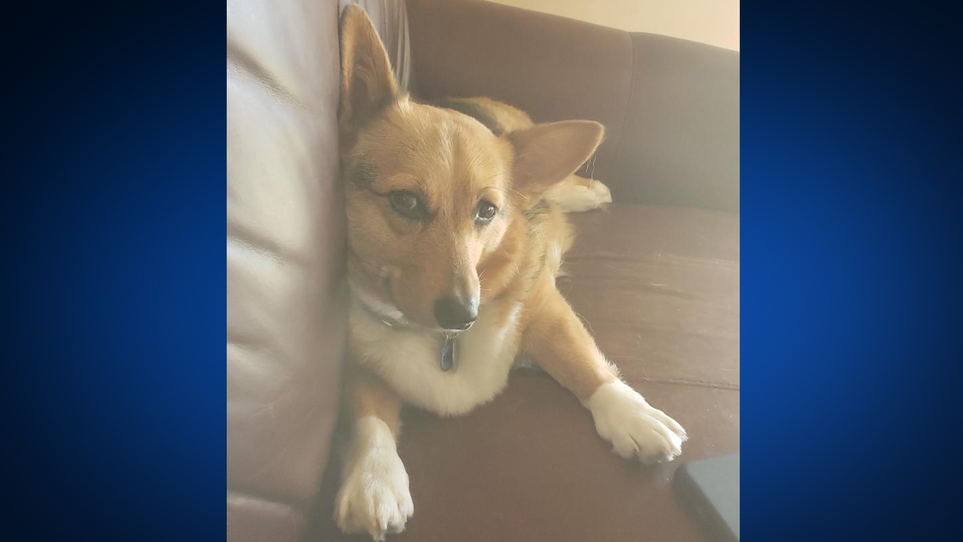 Sadie the dog is OK after a stranger entered her home and threw her over the couch (Viewer Photo)