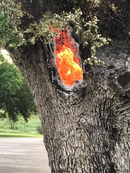 Ronna Wilson snapped these photos of a tree smoldering and glowing with heat Thursday after it was struck by lightning the night before on Wednesday at Legends Golf Course in Kingsland.
