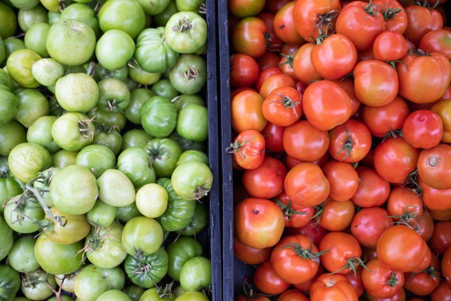 B5 Farm Tomatoes