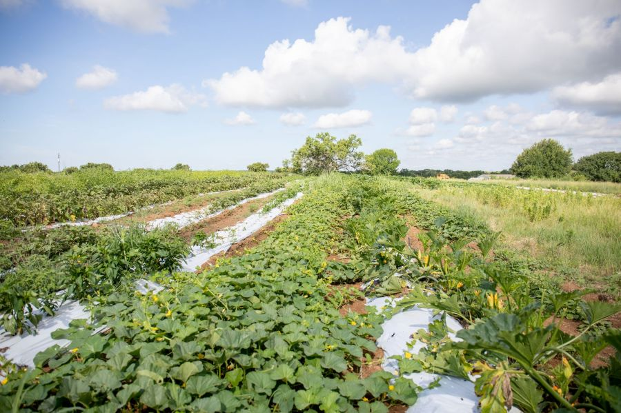 B5 Farm Fields